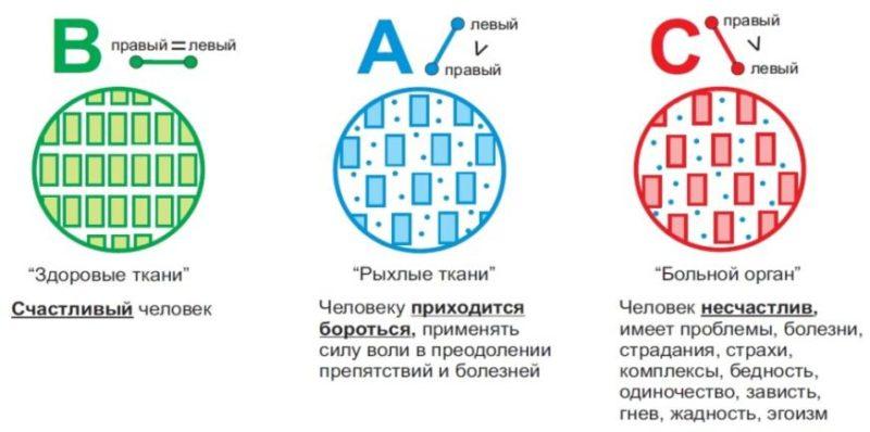 кузьменко15