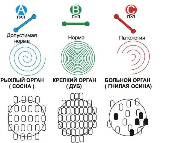 кузьменко7